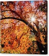 Sun Peaking Through The Autumn Colors  Acrylic Print