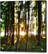 Sun Slivers Acrylic Print