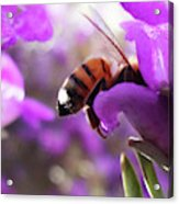 Sunburned Bee Butt Acrylic Print