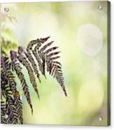 Sunny Awakenings Acrylic Print