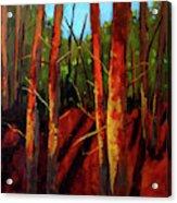 Sunny Forest Landscape Acrylic Print