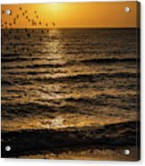 Sunrise Birds Nc Acrylic Print