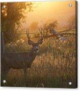 Sunset Deer Acrylic Print