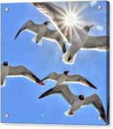 Sunshine And Seagulls Acrylic Print