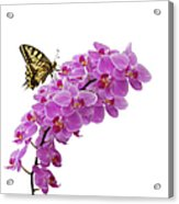 Swallowtail Butterly On Orchid Acrylic Print