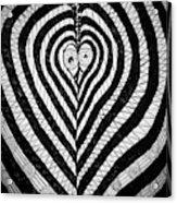 Swanlove Acrylic Print