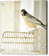Sweet Robin Acrylic Print