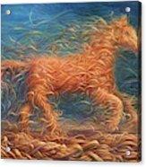 Swirly Horse 1 Acrylic Print