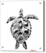 Tartoise Acrylic Print