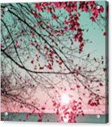 Teal And Fuchsia - Autumn Sunrise Reimagined Acrylic Print
