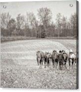 Team Of Six Horses Tilling The Fields Acrylic Print