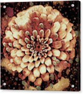 The Bloom Of Fall Acrylic Print