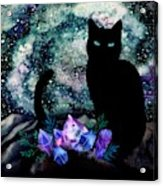 The Cat With Aquamarine Eyes And Celestial Crystals Acrylic Print