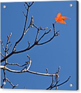 The Last Leaf During Fall Acrylic Print