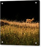 The Lonely Deer Acrylic Print
