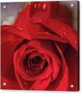 The Magic Of Roses Acrylic Print