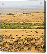 The Masai Mara Acrylic Print