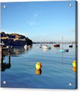 The Mylor Dolphin Acrylic Print