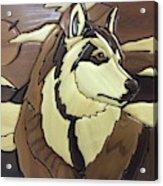 The Proud Husky Acrylic Print