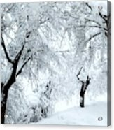 The Pure White Of Snow Acrylic Print