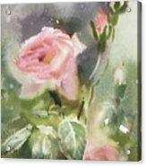 The Rose From A Misty Appalachia Acrylic Print