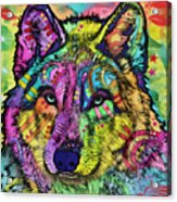 The Stare Of The Wolf Acrylic Print