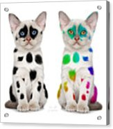 The Twins Dalmatian Cats Acrylic Print