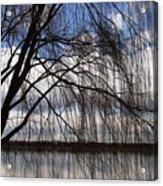 The Veil Of A Tree Acrylic Print