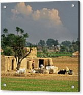 The Village Of Punjab Acrylic Print