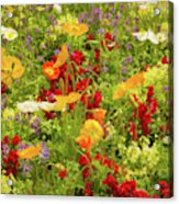 The World Laughs In Flowers - Poppies Acrylic Print