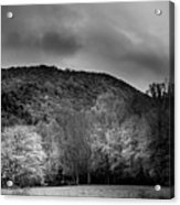 The Yellow Tree In Black And White Acrylic Print
