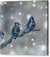 Three Blue Jays In The Snow Acrylic Print