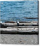 Three Gulls On A Log Acrylic Print