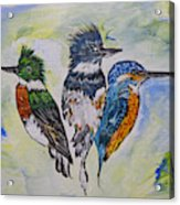 Three Kingfisher Birds - Painting By Ella Acrylic Print