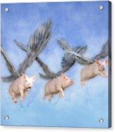 Three Little Pigs  Acrylic Print