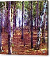 Through The Forest Acrylic Print