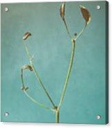 Tiny Seed Pod Acrylic Print