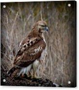 Totem Animal Book Hawk Acrylic Print
