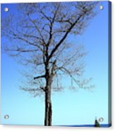 Tree And Great Lake Acrylic Print