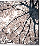Tree Branches Acrylic Print