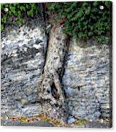 Tree In Stone Acrylic Print