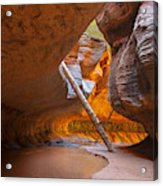 Tree In The Subway - Left Fork In Zion Acrylic Print