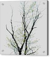 Tree Series Five Acrylic Print