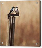 Tree Swallows On Wood Post Acrylic Print