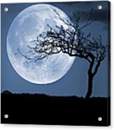 Treelight Acrylic Print