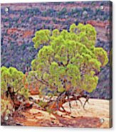 Trees Plateau Valley Colorado National Monument 2871 Acrylic Print
