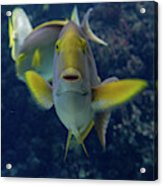 Tropical Fish Poses. Acrylic Print