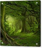 Tropical Jungle In Southeast Asia Acrylic Print