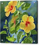 Tropical Yellow Orange Hibiscus With Background Acrylic Print