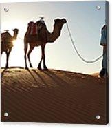 Tuareg Man & Camels, Erg Chebbi, Sahara Acrylic Print